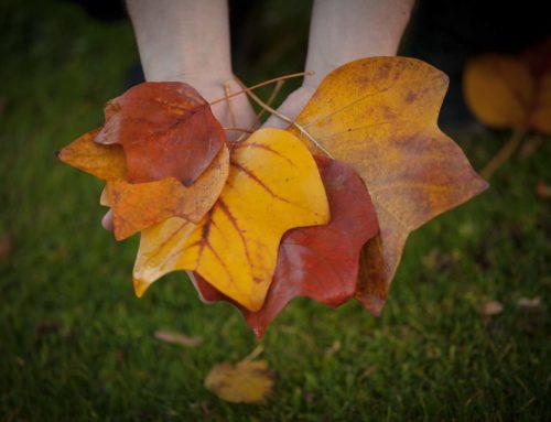 Auch dieses Jahr spricht die Herbst Wintermode für sich